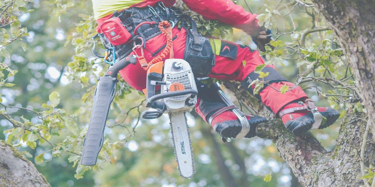 wycinka drzew metodą alpinistyczną