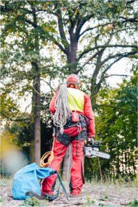 Nie Ma Lipy - zgłoszenie zamiaru usunięcia drzewa