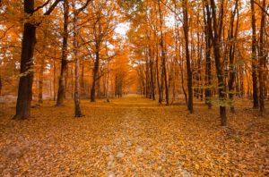 Nie Ma lipy na kursie z rozpoznawania poszczególnych gatunków drzew