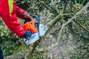 Nie Ma Lipy wycina drzewa dla firmy Major Domus