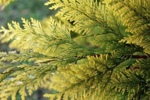 aktualne przepisy dotyczące wycinki krzewów