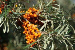Nie Ma Lipy - przepisy dotyczące wycinki krzewów
