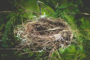 Okres lęgowy ptaków - Nie Ma Lipy