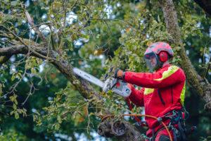 pielęgnacja drzew przepisy - Nie Ma Lipy
