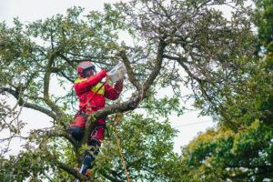 Aktualne przepisy dotyczące pielęgnacji drzew