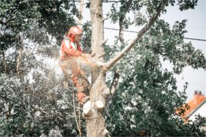 Nie Ma Lipy - opłata za wycinkę drzew