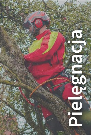 pielegnacja drzew i krzewow