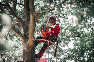 cięcia pielęgnacyjne drzew