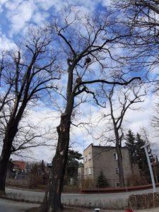 pielęgnacja drzew na terenie zabytkowym