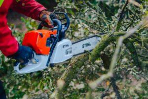 kara za wycięcie drzewa