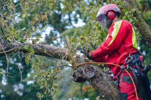 pielęgnacja drzew na terenach zabytkowych