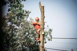 koszt wycięcia drzewa