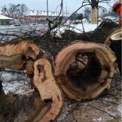 Nie Ma Lipy - wycinanie drzew pod drogę rowerową we Wrocławiu