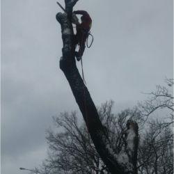 Nie Ma Lipy - wycinka drzew na Kromera we Wrocławiu