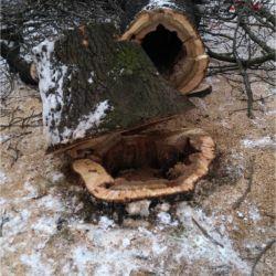 Nie Ma Lipy - wycinka drzew pod inwestycję na Kromera