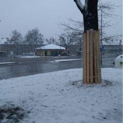 Nie Ma Lipy - zabezpieczenie drzewa na Alei Kromera