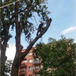 Firma Nie Ma Lipy - pielęgnacja drzew w Gliwicach