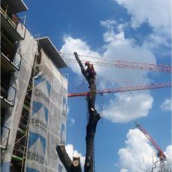 Firma Nie Ma Lipy usuwa drzewo na budowie