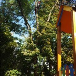 Nie Ma Lipy pielęgnuje drzewa na Żernikach Wrocławskich