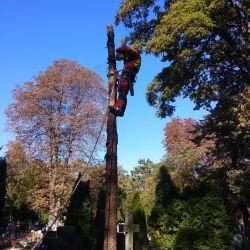 Nie Ma Lipy - wycinka drzew na cmentarzu przy ul. Bujwida