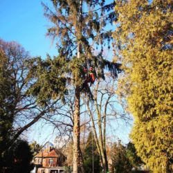 Nie Ma Lipy - usuwanie drzewa na cmentarzu