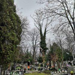 Nie Ma Lipy wycina brzozę na cmentarzu przy ul. Bujwida