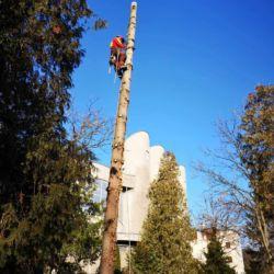 Usuwanie drzew na wrocławskim cmentarzu