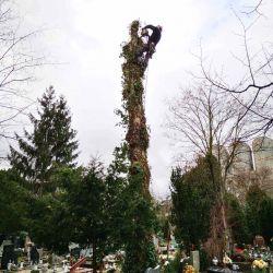 Wycinka uschniętego drzewa na cmentarzu