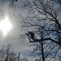 Pielęgnacja drzew w Jaszkotle