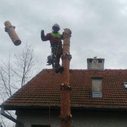 Wycinka sosny na Wojanowie