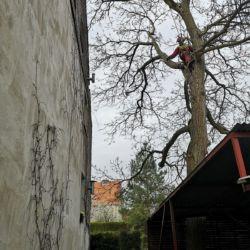 Przycinka orzecha Sępolnie - Nie Ma Lipy