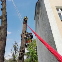 Usunięcie lip w Leśnicy - Nie Ma Lipy