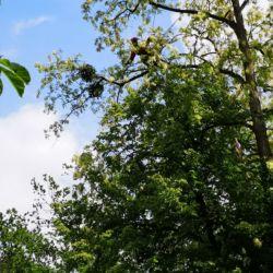 Pielęgnacja drzew na cmentarzu