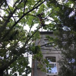 Nie Ma Lipy pielęgnuje drzewa w Domu Samotnej Matki