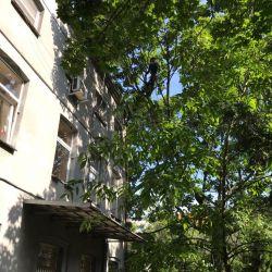 Pielęgnacja drzew w domu samotnej matki we Wrocławiu