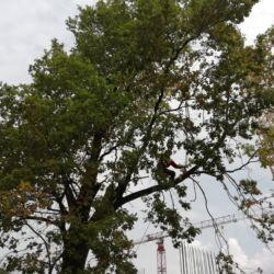 Usuwanie drzew z pomocą żurawia - Popowice