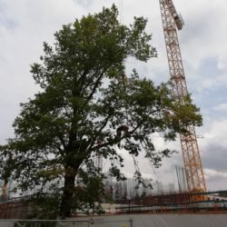 Wycinka drzew na budowie na wrocławskich Popowicach