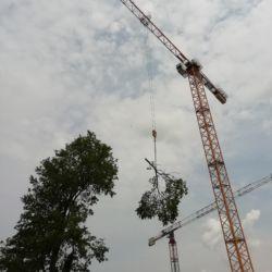 Wycinka drzew z pomocą żurawia we Wrocławiu