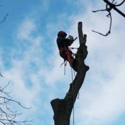 LG w gminie Kobierzyce - wycinka drzew