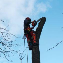 Nie Ma Lipy wycina drzewo w Kobierzycach