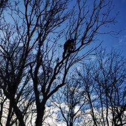 Usuwanie drzew na terenie LG