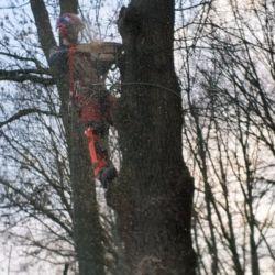 Wycinka drzew na terenie LG