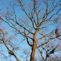 Nie Ma Lipy pielęgnuje drzewa rosnące na cmentarzu