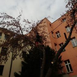 Nie Ma Lipy - usuwanie drzew na Rynku we Wrocławiu