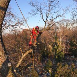 Pielęgnacja drzew przez firmę Nie Ma Lipy na wrocławskim cmentarzu