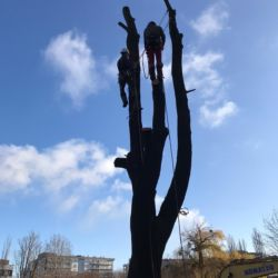 Przenosiny zimujących nietoperzy we Wrocławiu