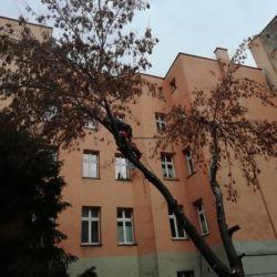 Wycinka drzew przy ul. Więziennej - Nie Ma Lipy