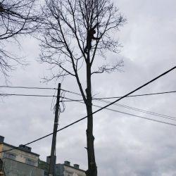usuwanie drzew na wrocławskich kowalach