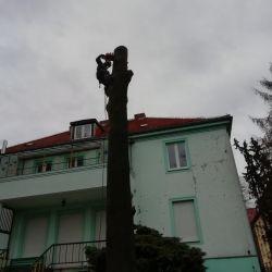 usuwanie drzew w chojnowskim przedszkolu