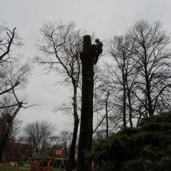wycinka drzew w przedszkolu w chojnowie